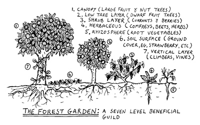 Food forest layers edited